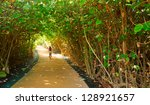 Tree tunnel in Hawaii - stock photo
