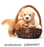 Stock photo two puppies in basket on white background 128944997