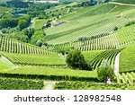 vineyars near Barbaresco, Piedmont, Italy - stock photo