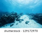 bottom of the ocean - stock photo