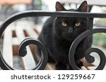 Stock photo black cat sitting on a bench in the park looking at the camera 129259667