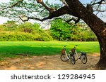 bicycles under big tree in the park - stock photo