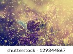 vintage photo of butterfly in... | Shutterstock . vector #129344867
