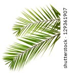 Isolated Palm Leaves On White...