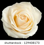White Rose Isolated On A Black...