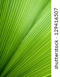 Abstract Image Of Green Palm...