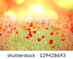 red poppy field at sunset | Shutterstock . vector #129428693