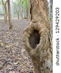 Trunk Of Tree With Hole  In Th...