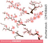 Blooming Cherry Blossom Branches Isolated on White. Vector - stock vector