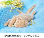 Stock photo little cream cat sleeping near chamomile 129476417