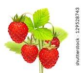 Wild Strawberry Macro Isolated...