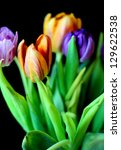 Colorful bouquet of fresh tulips on black - stock photo
