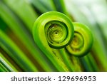 The Green Fern Origin  To In...