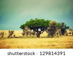 Savanna landscape in Africa, Serengeti, Tanzania. Kigelia called Sausage Tree - stock photo