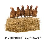 Row Of Hen Standing On A Straw...