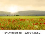 Field of poppies with mountains at background - stock photo