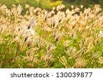 grass field in sunset mood | Shutterstock . vector #130039877