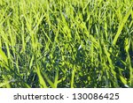 fresh green grass background with bright sun light - stock photo