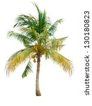 coconut tree isolated on white... | Shutterstock . vector #130180823