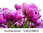 Group Purple Tulips On A White...