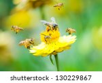 Close Up Group Of Bees On A...