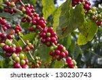 coffee beans | Shutterstock . vector #130230743