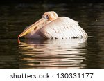 Pink Pelican In The Water ...