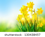 Bright Yellow Daffodils An A...