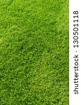 Photo of the beautiful green grass texture - stock photo