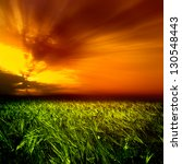 field of wheat and cloud in the ... | Shutterstock . vector #130548443