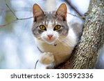 Cute gray and white cat in a tree looking for birds. - stock photo