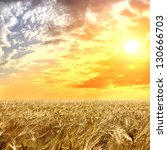field of wheat and cloud in the ... | Shutterstock . vector #130666703