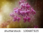 Fairytale style pink orchid flowers - stock photo