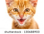 red little cat on the isolated... | Shutterstock . vector #130688903