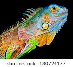 Colorful iguana on black background - stock photo