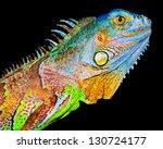 Colorful Iguana On Black...