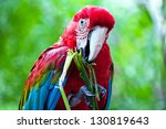 Colorful Parrot Bird Sitting...