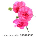 A pink carnation bouquet - stock photo