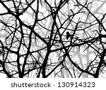 Branches Of Trees In Winter....