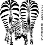 Two Zebras Eating Grass   Pose...