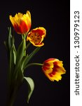 Yellow Red Tulips On A Black...