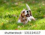 beagle in green grass | Shutterstock . vector #131114117