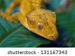 new caledonian gecko   Shutterstock . vector #131167343
