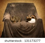 Two Cats Sleep In The Old...