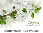 Branch of white spring blossom - stock photo