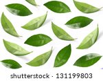 Collage of leaves - stock photo