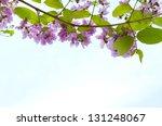 Purple Flowers On Blue Sky...