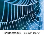 The Spider Web close up. - stock photo