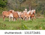 Herd of horses with foals running on meadow - stock photo