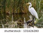 Snowy Egret In Natural Habitat...